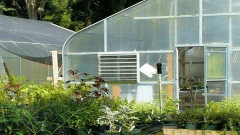 best cheap greenhouse