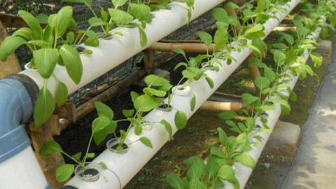 Hydroponic Plant Top Nutrients